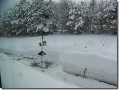 jANUARY 22,2011 056