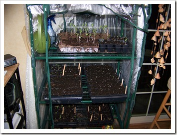 green house 2.5  weeks 002