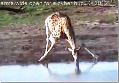 africam 1-24-2012 011