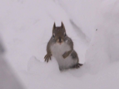 squirrel-who-ate-too-much